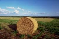 agricoltura-foto