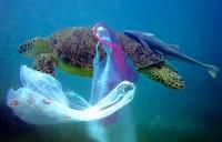 tartaruga-con-sacchetto-plastica