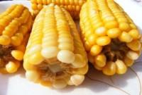 Mais-OGM