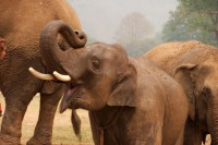 Original image URL: http://www.flickr.com/photos/christianhaugen/3365753079/ Title: Elephant Nature Park