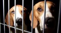 animal testing vivisezione