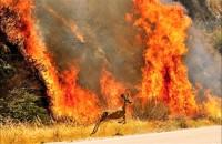 incendio doloso Molise Corpo Forestale dello stato