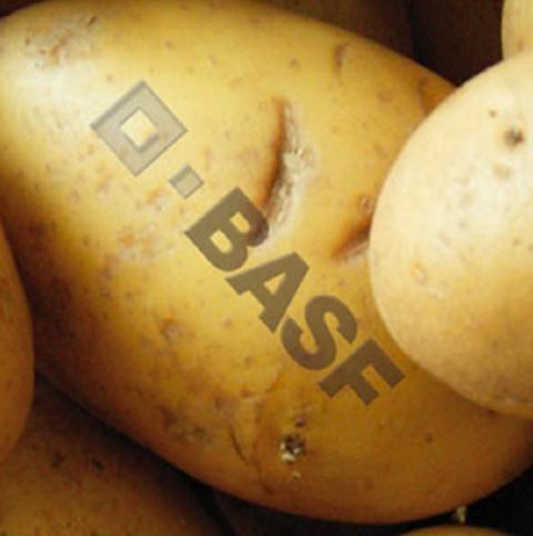 Patata-OGM-Amflora