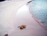 budelli-spiaggia-rosa-480