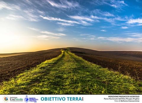 Bellomo Giancarmine - Parco Nazionale Alta Murgia MENZIONE PAESAGGIO AGRICOLO